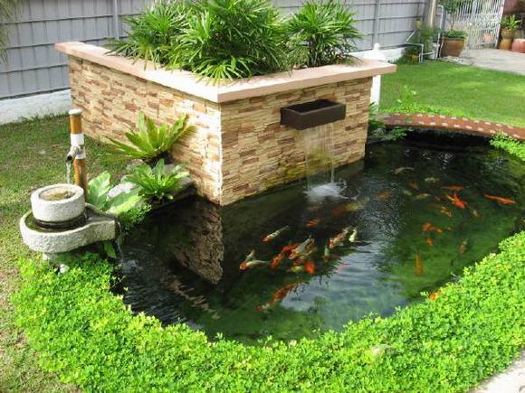 hồ cá Koi mini sân vườn