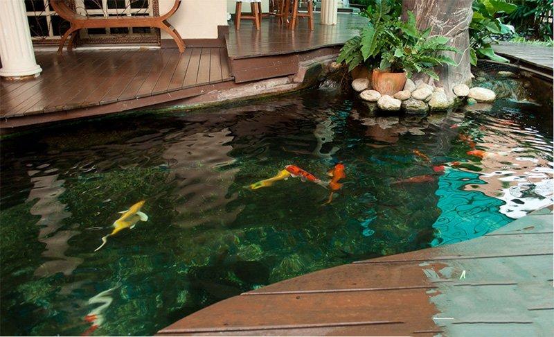 Hồ cá koi mini trong nhà đẹp